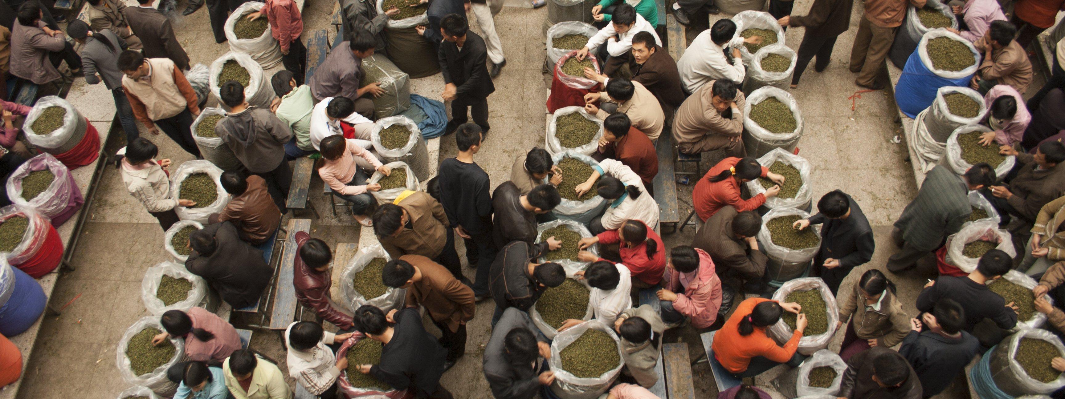 Tea-Garden_Anxi-Tea-Market