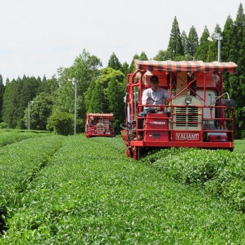 JING Organic Matcha is produced in Kirishima, Kagoshima in the far south of Japan.