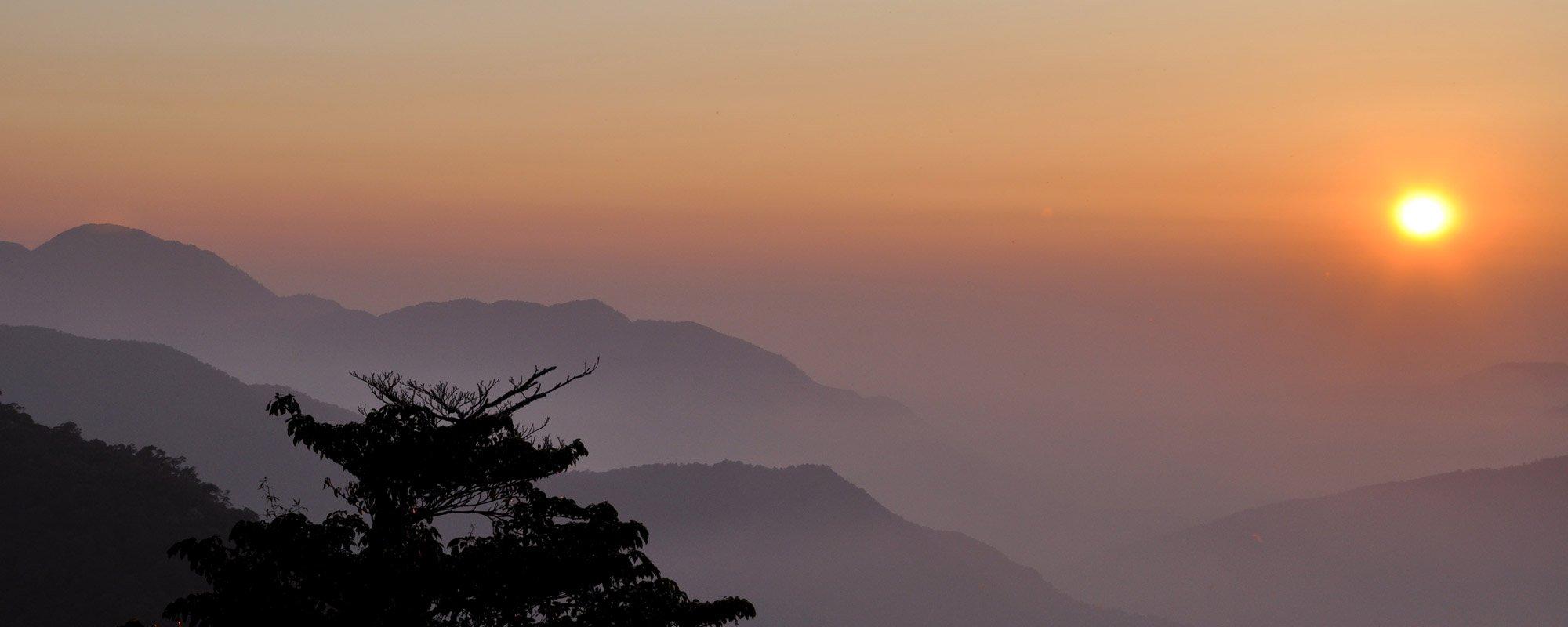 traditional-iron-buddha-supreme_tea-garden_blog