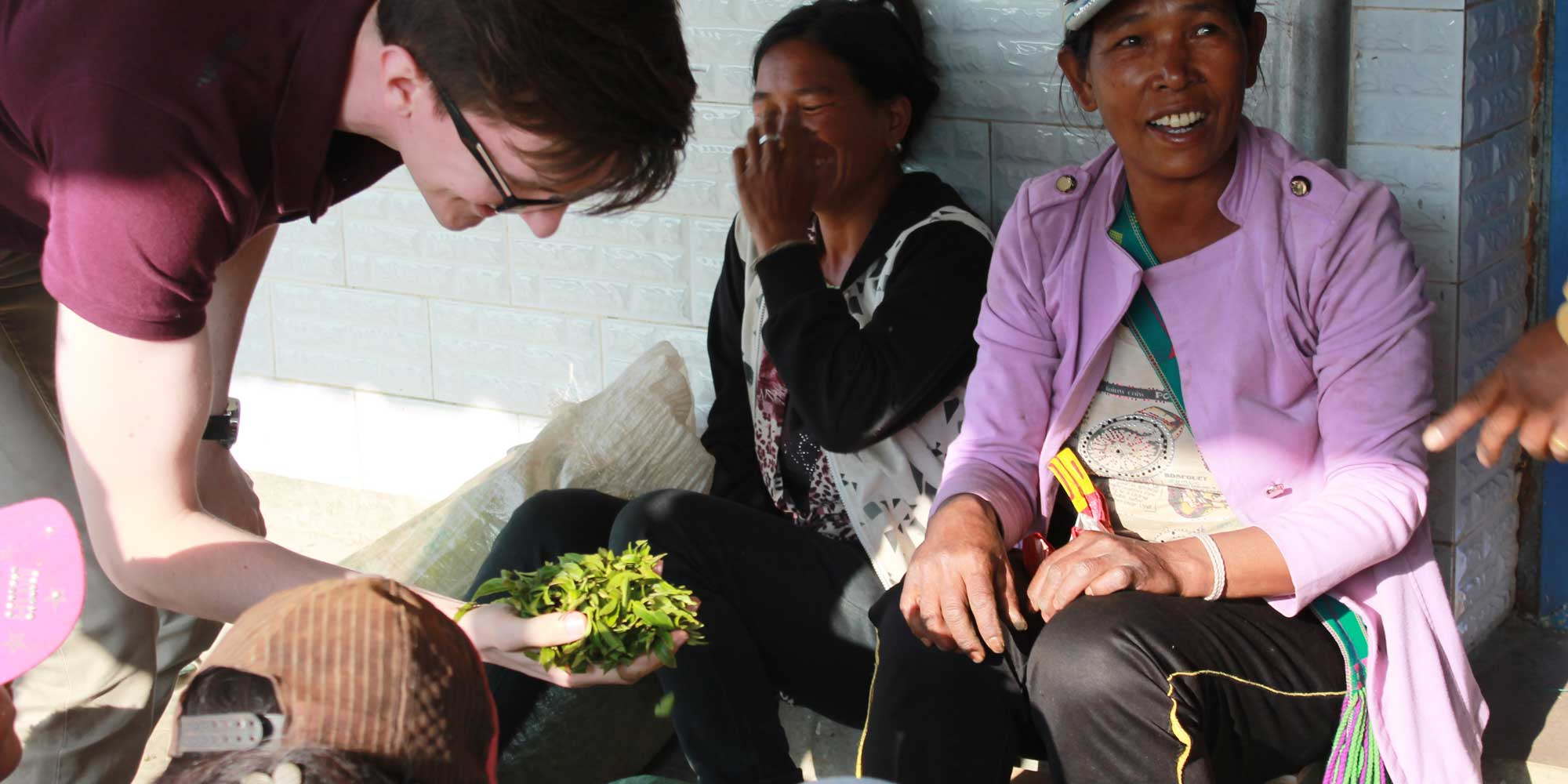 Tom inspect freshly picked tea leaves with local Chinese tea pickers