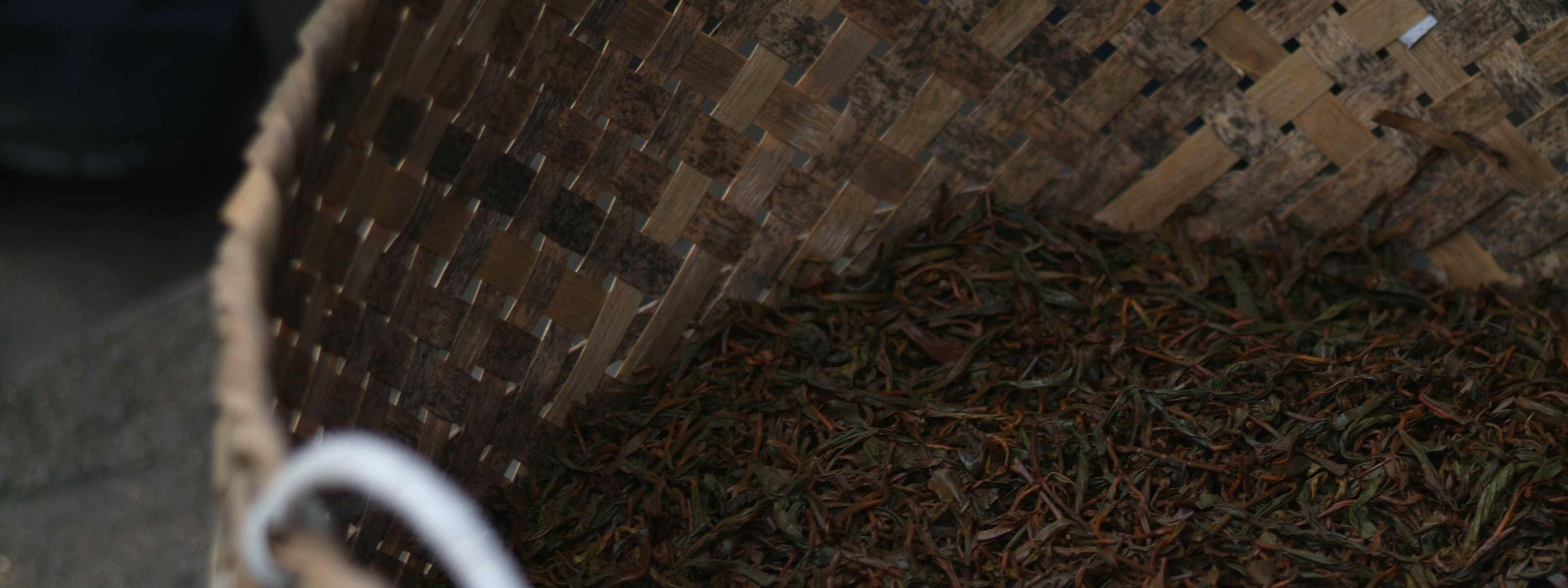 Tea-Garden_Bohea-Lapsang-Oxidised-Tea__Fujian-China