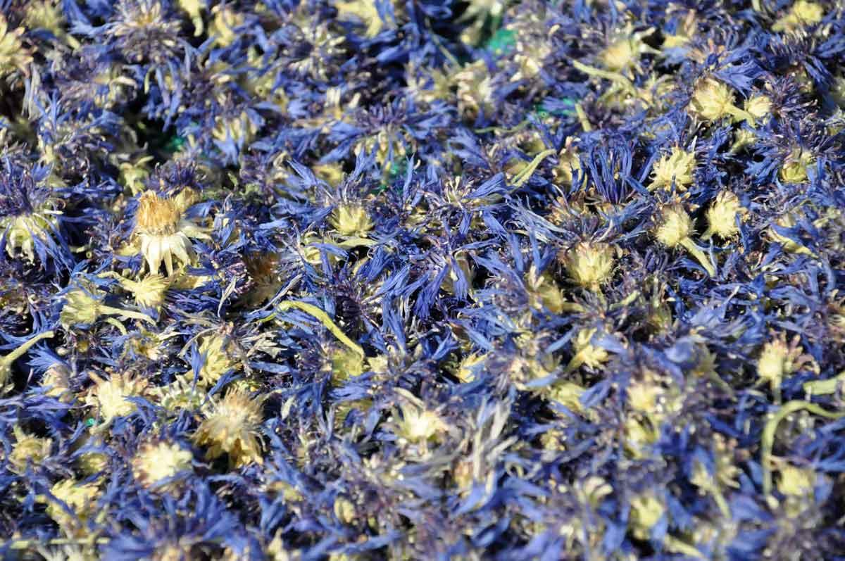 Loose Blue Cornflowers for Earl Grey Loose Tea