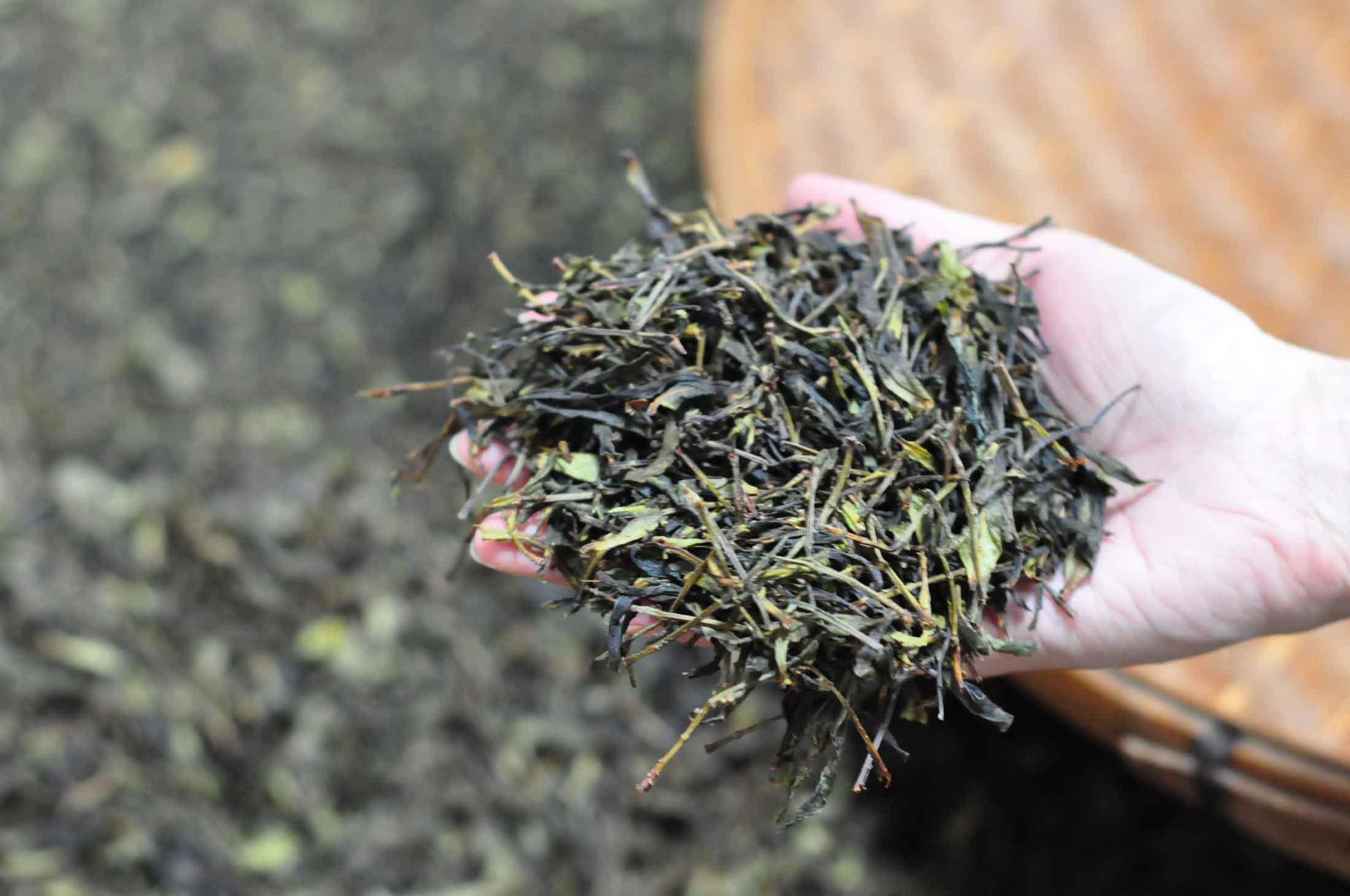 A Handful of Tea Leaves from our 2011 Sourcing Trip