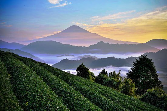 JING Asia's Greatest Tea Regions