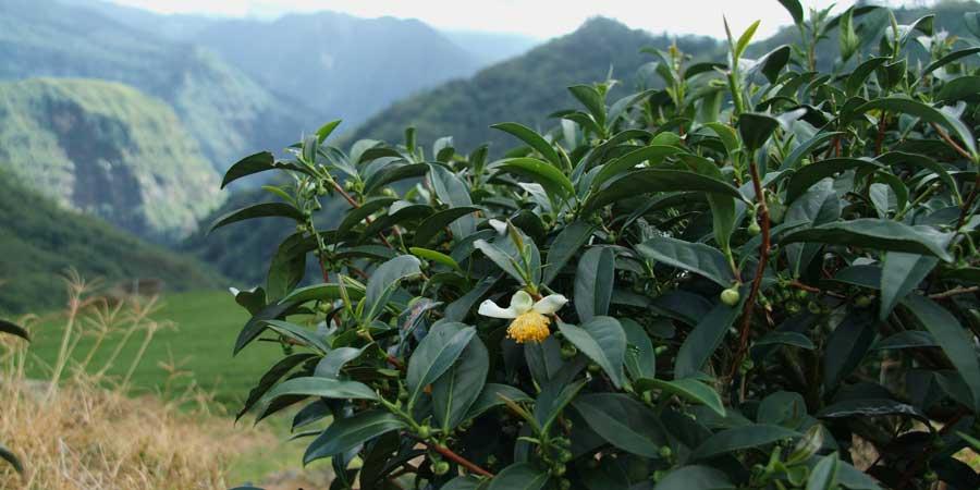 Chenjia-Garden