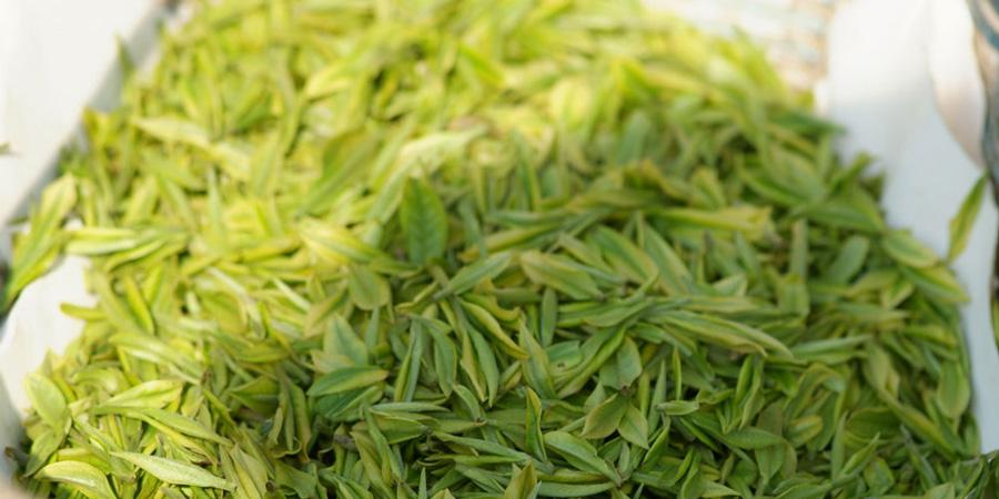 Jade-sword_loose_tea-processing2