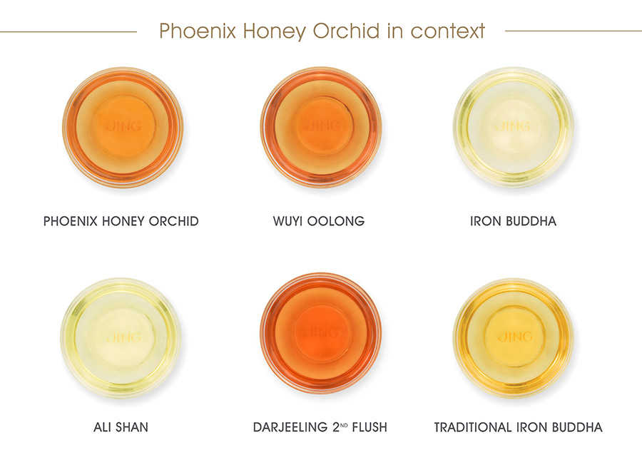 Pheonix Honey Orchid_In context