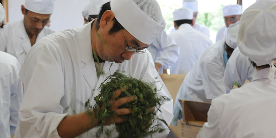 Traditional processing of steamed tea leaves