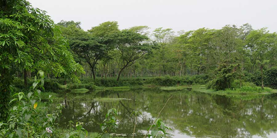 Dejoo Garden is on the North Bank of the Brahmaputra River, this tributary the River Ranga forms the eastern border of the garden