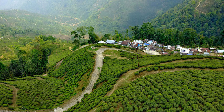 The area of Darjeeling in West Bengal is in the foothills of the Himalaya.