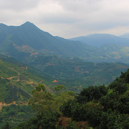 Fujian Province in southeastern China - where our Jasmine Pearls are from