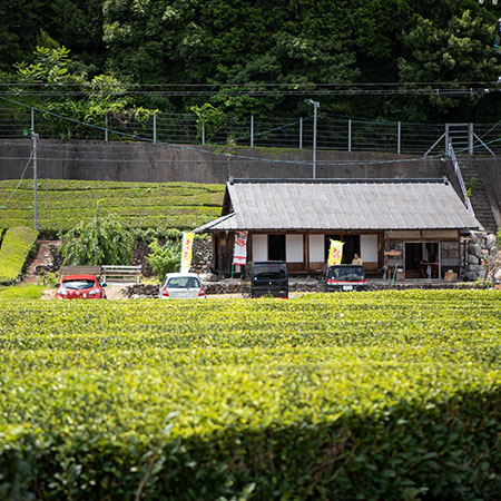 Ishiyama's Tea Shop, flanked by rows of tea bushes and bamboo