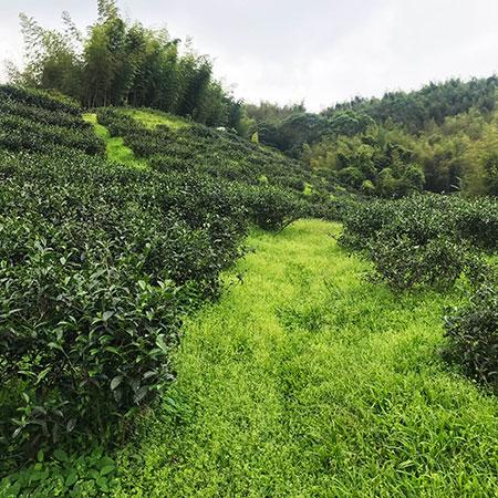 JING_Shanlinxi_Garden 16