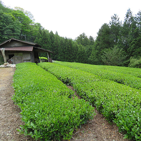 Kawane is made up of small plots, most of them with their own wooden workshops where the leaves are prepared after picking