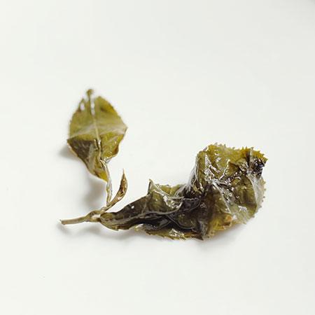 Shanlinxi wet leaf