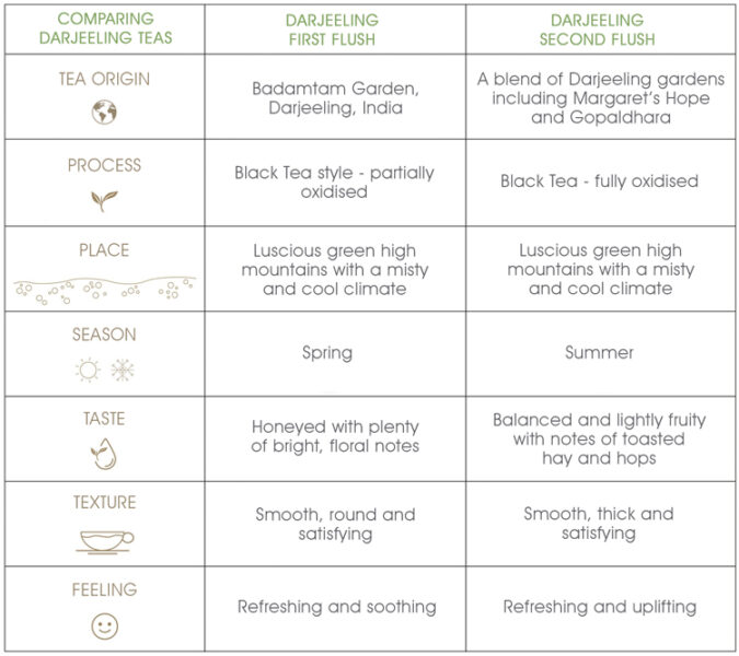 Darjeeling-1st-and-2nd-flush-comparison-chart