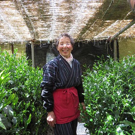 Mrs Miyazaki with her prized tea plants.
