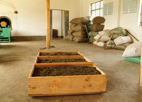 Origin_Black-Tea_Yunnan-Gold_2010_9