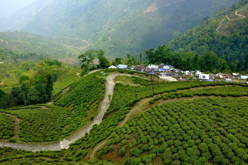 The-area-of-Darjeeling-in-West-Bengal-is-in-the-foothills-of-the-Himalaya