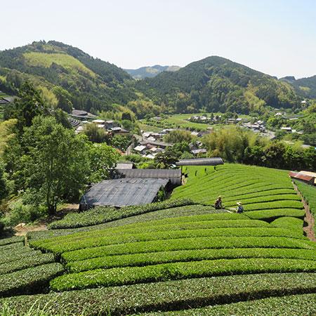 The stunning view over the Miyazaki's garden in Shizuoka.