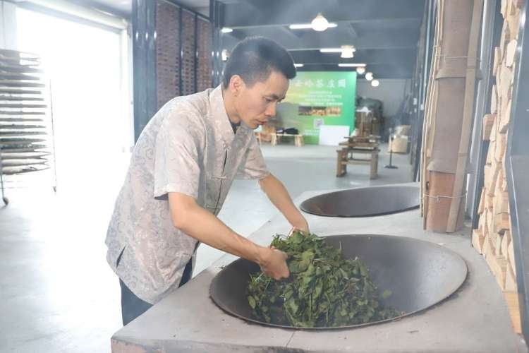 Producer Wang Changjin fixing the leaves, also known as 'shaqing.