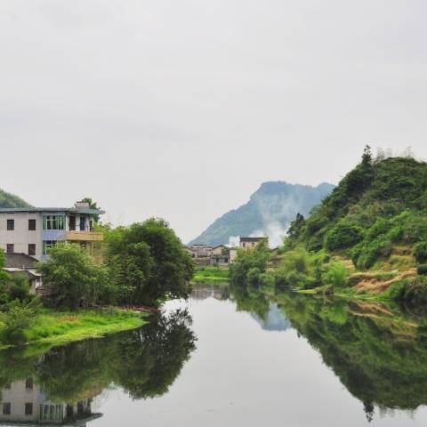 Many of the gardens in Qimen county are fed by small, clear streams nestled in between verdant pine or bamboo forests that cover the mountains and valleys.