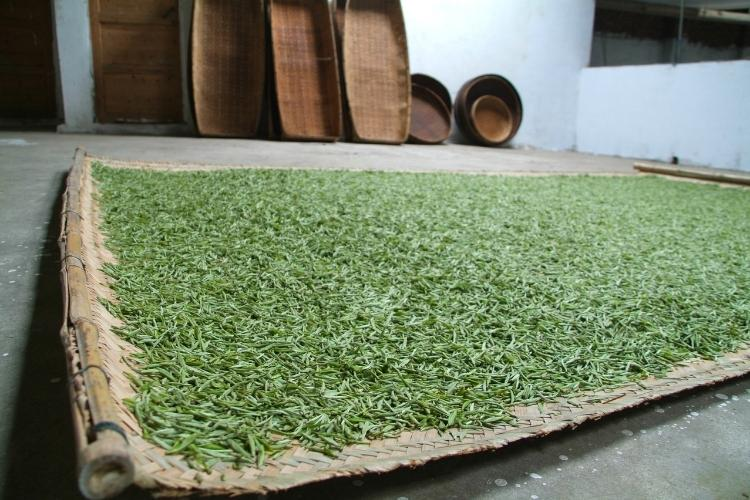 After being picked in the spring, the young buds are laid on trays to wither slowly, which dries them and concentrates their flavours.