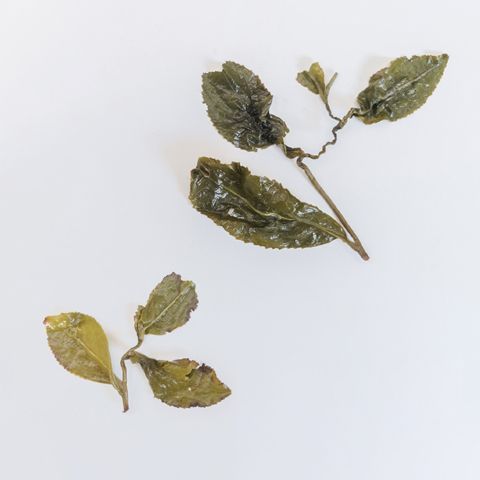 Both Ali Shan (left) and Li Shan (right) are ball-rolled, a step in the processing where the large leaves are compressed and unfurl once infused.