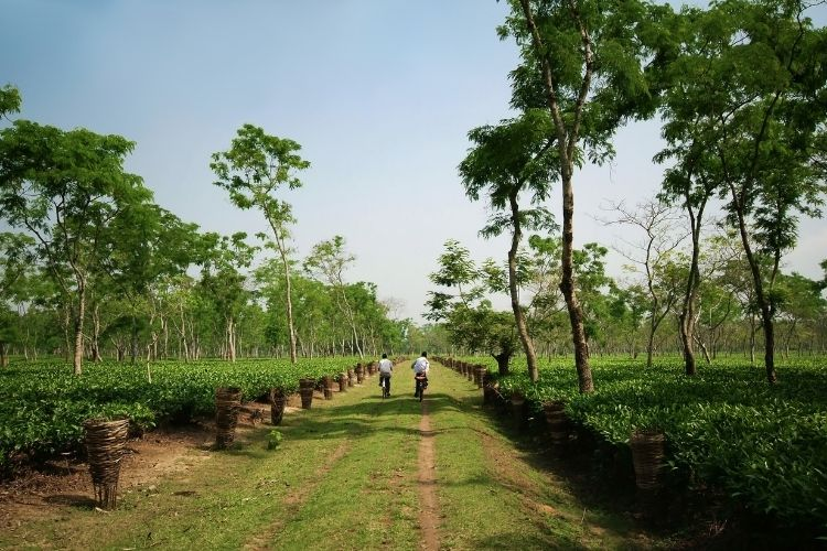 Choosing single origin not only means you'll get more distinctive tasting tea, but it also enables tea producers and their environments to thrive.