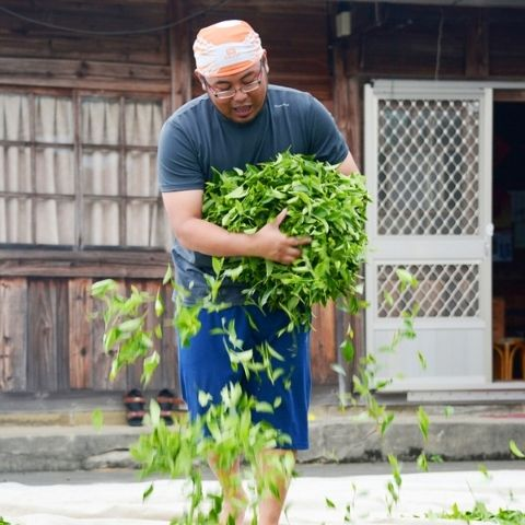 Shenteng Chen in the full swing of producing his Ali Shan oolong during spring season last year.