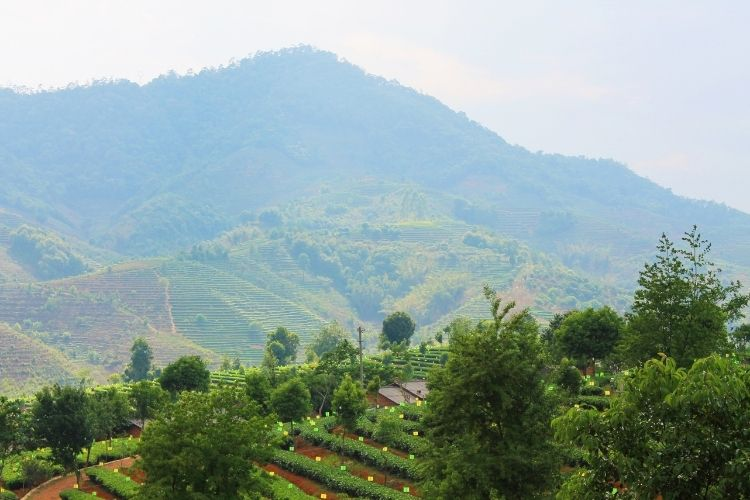 The soil in Yunnan is extremely fertile and the rural and mostly untouched nature of the province means the environment is biodiverse.
