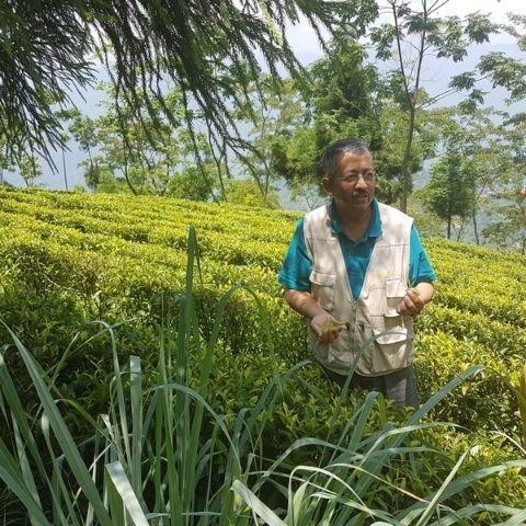 Mr. Sen has seen the positive results of organic methods in Badamtam Garden, Darjeeling.
