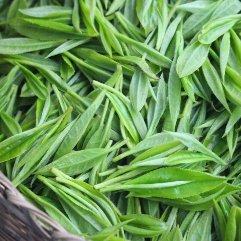 Single garden teas have purity and clarity of taste – just leaf and water.