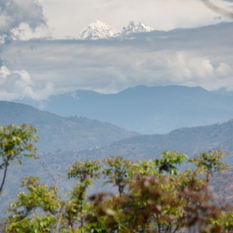The green, rolling hills of Darjeeling are set against a backdrop of mighty snowcapped Himalayan peaks like Kanchenjunga.