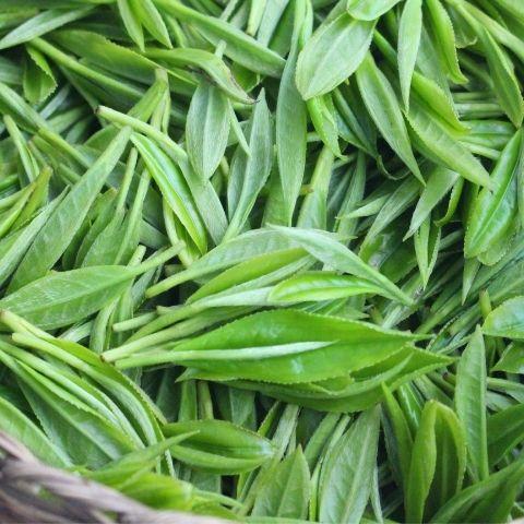 Choosing tea made using organic farming principles safeguards the natural terroir of an origin.