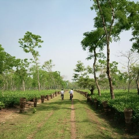 Many of the tea workers on India's largest plantations are provided with housing to live and work in the gardens.
