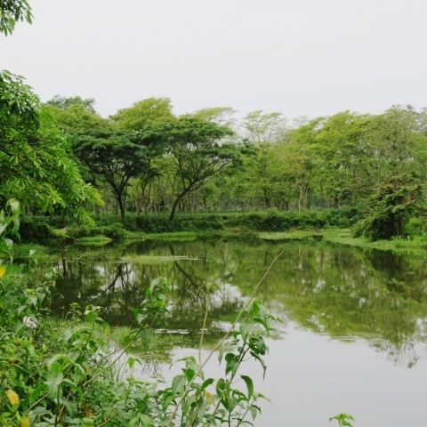 Assam's tea gardens are predominantly low lying and clustered around the Brahmaputra river, often flooded by monsoon rains.