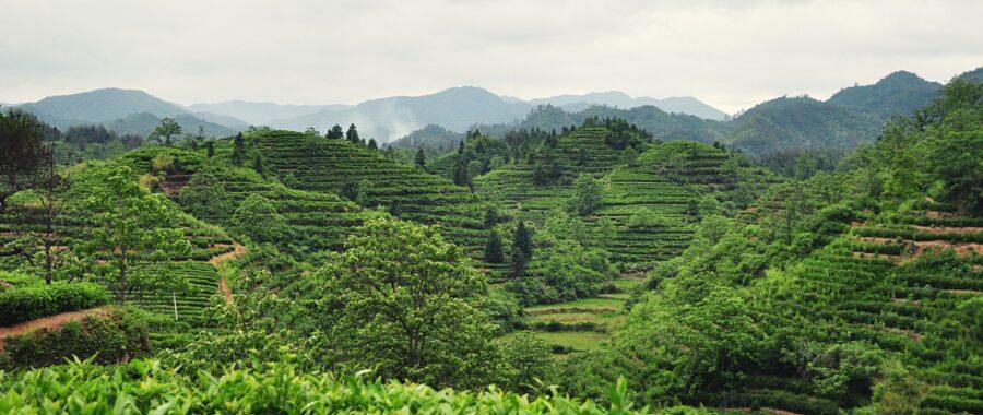 Single Garden Tea is Exceptional