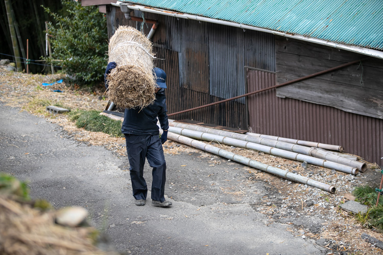 Each straw screen is carried up to the tea field from a small shed where they're kept during the off-season and will be reused for another spring