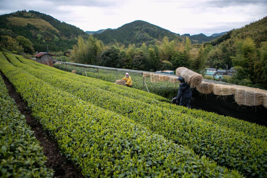 A view over the Asahina Valley in Shizuoka, where the Miyazaki's tea garden has existed for over 300 years