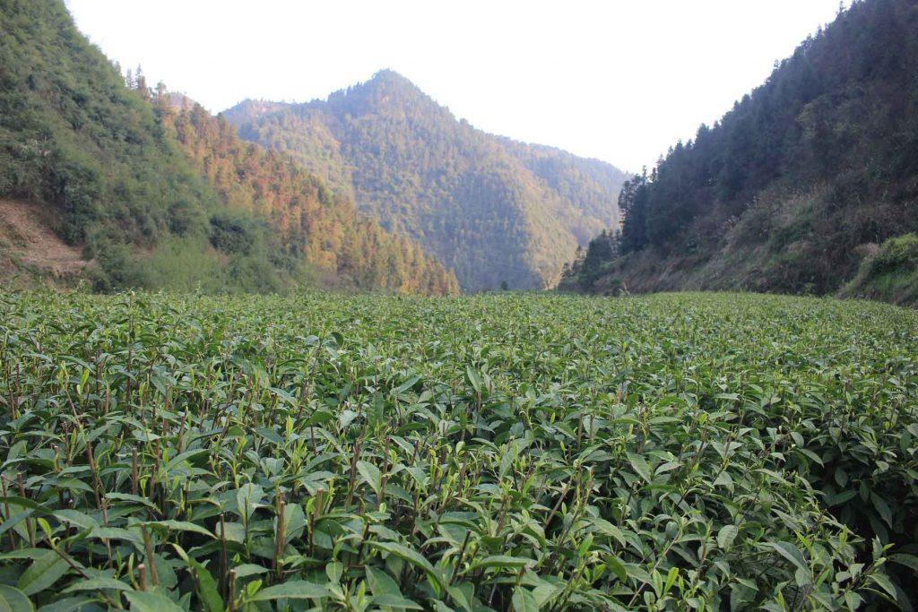 Ludong-Mountain-Garden