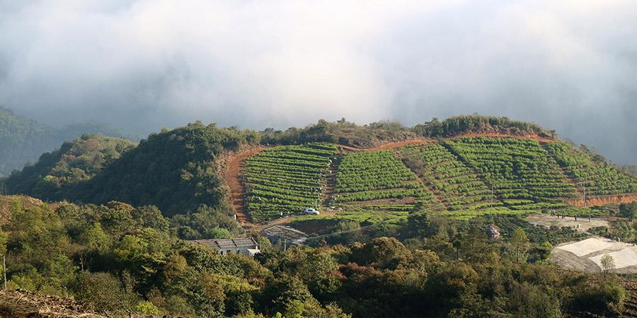 The Phoenix Mountains, Guangdong.