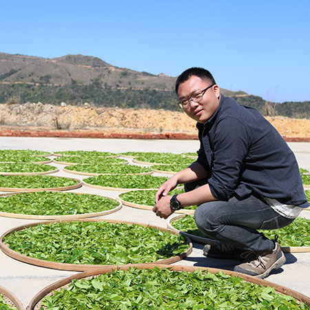 Here Luo has laid out the leaves which would have stayed on the trays for a few hours, withering in the sunlight, starting to loose moisture and develop their flavours. 
